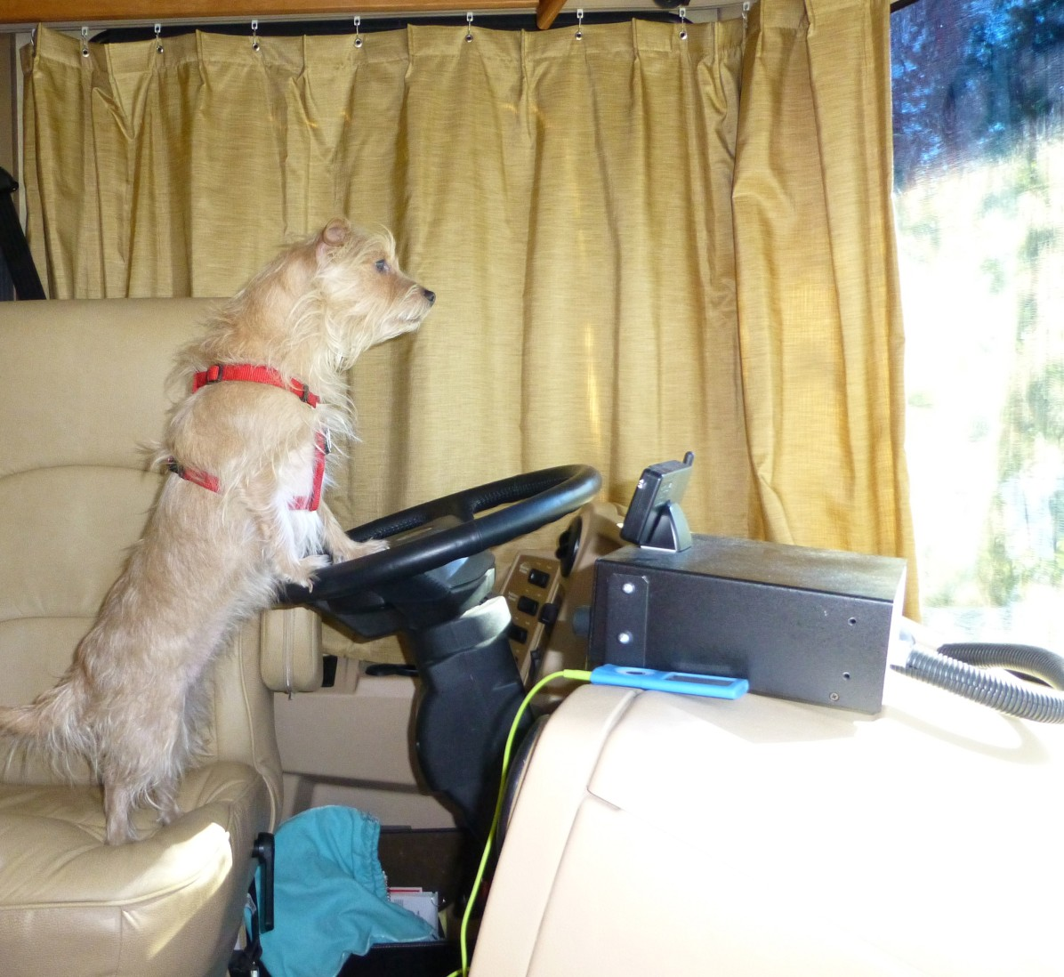 Cookie, the wanna be driver