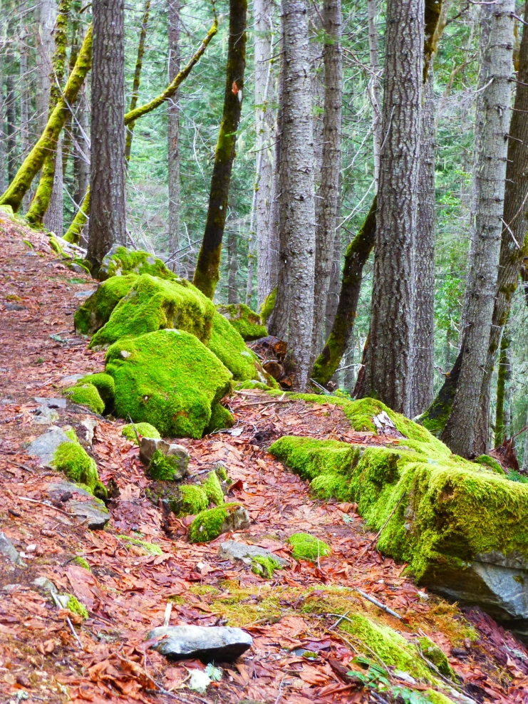 Moss at Oregon Caves