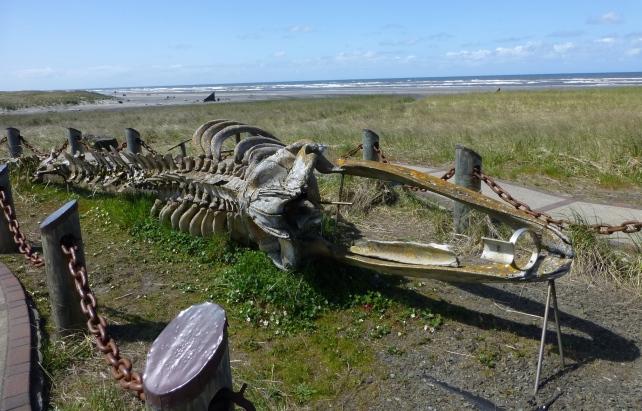 Skeleton of Gray Whale