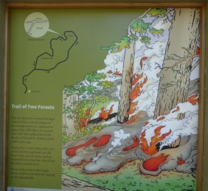 Synopsis of the Trail of Two Forest