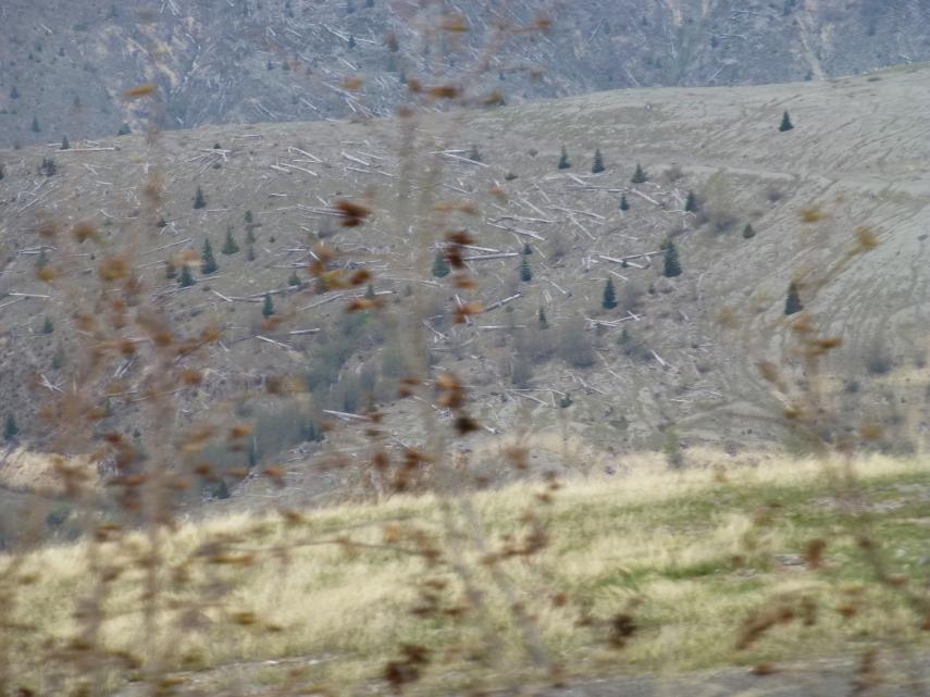 Blasted trees