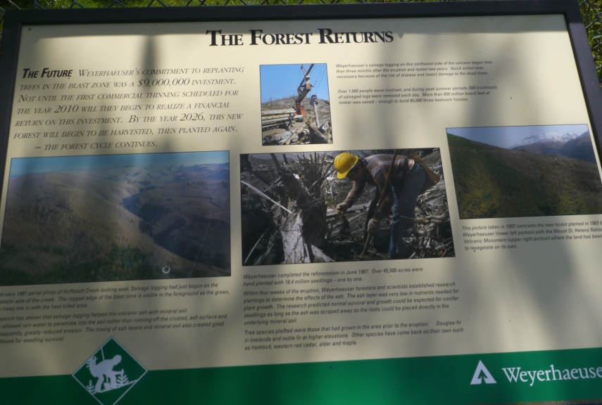 Story of regenerating the forest