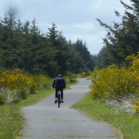 Yellow flowers along the bike trail