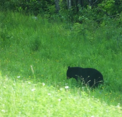 Baby bear having breakfast