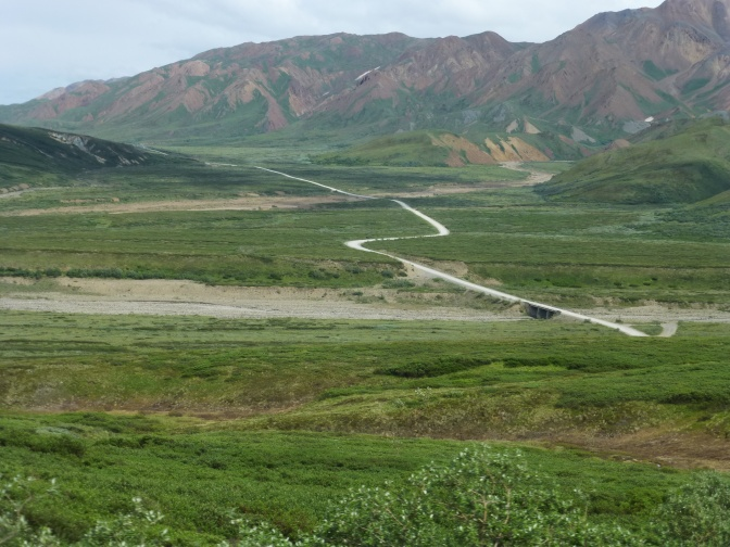 Inside Denali National Park