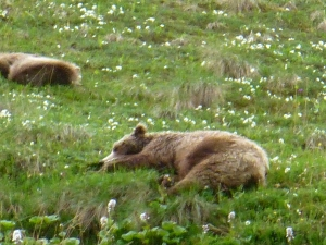 Sleeping Bears