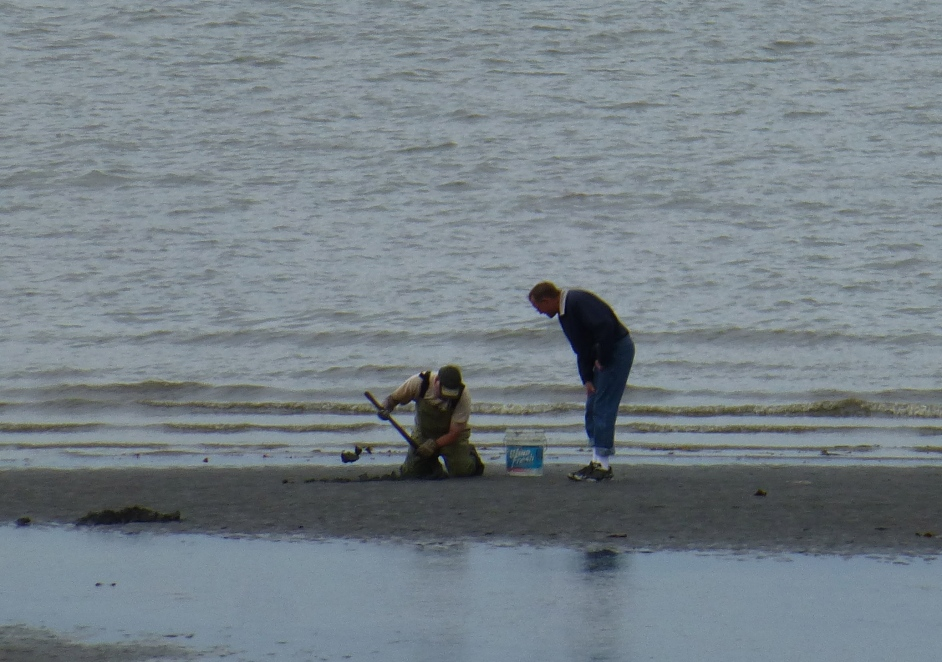 Razor Clamming in Ninilchik, Alaska