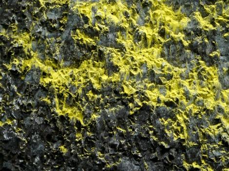 Close up of yellow lichen , Latourell Falls