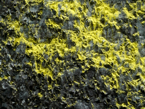 Close up of yellow lichen , Latourell Falls