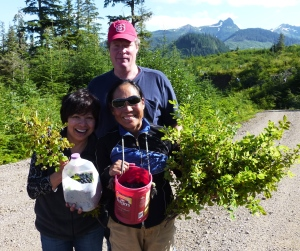 Wild Blueberries for the picking Alaska