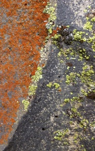 Lichen on lava