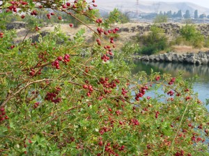 Riverfront Trail at The Dalles