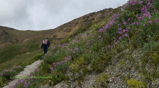 Alpine Trail, Denali National Park