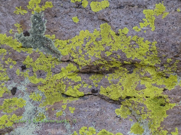 Green Lichens