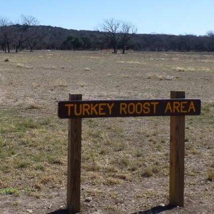 Turkey roost Area