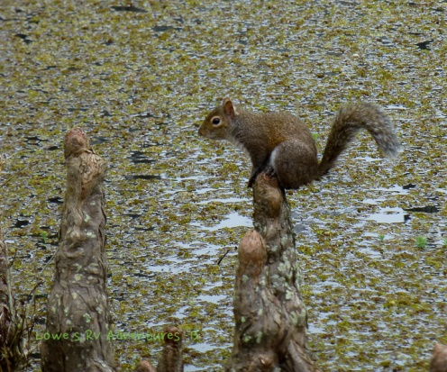 Squirrel pooing