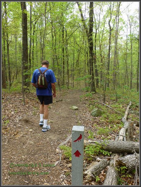 Songbird Habitat Woods Trail