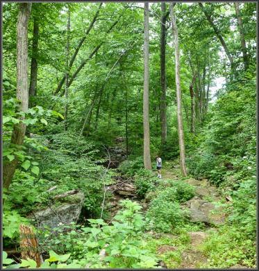 Buck Hollow Stream