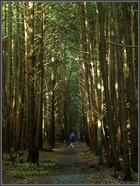Beaver Dam Trail