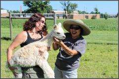 Playing with Alpaca