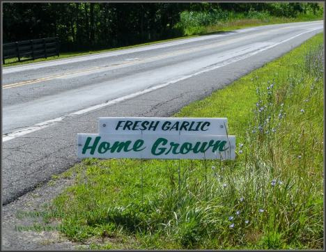 Fresh Garlic sign