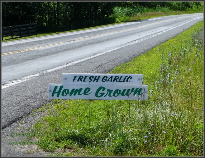 Fresh Garlic sign