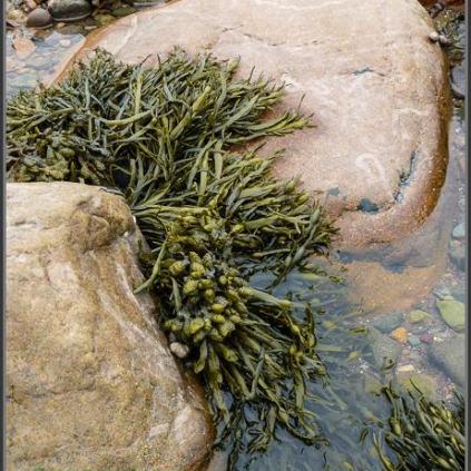 Lots of seaweed