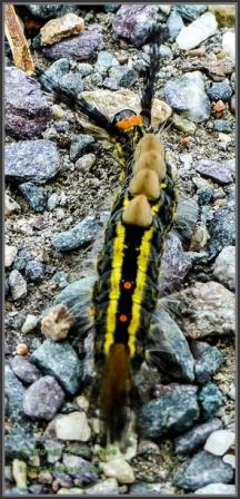 Colorful critter