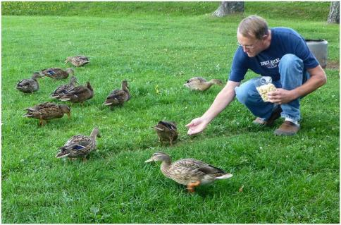 Steve and the ducks