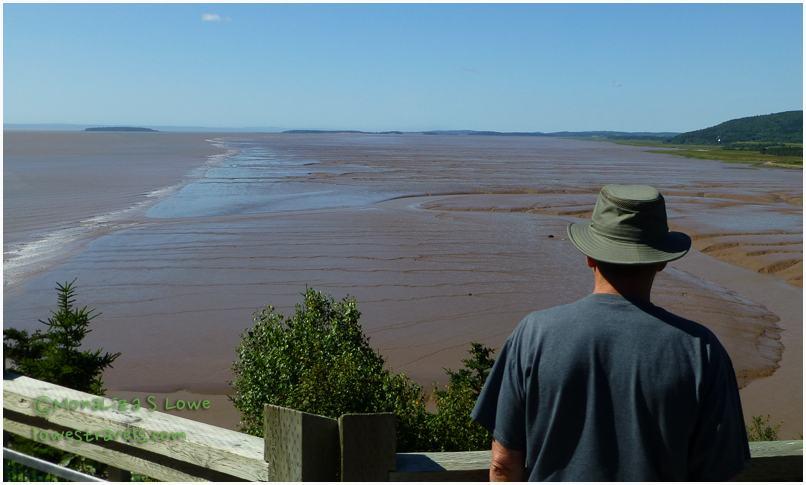 Hopewell's Mud Flats