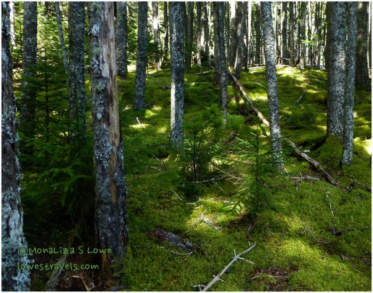 Anvil Trail, Schoodic Peninsula