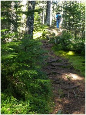 Schoodic Anvil Trail