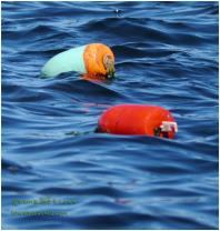 Color Coded buoys