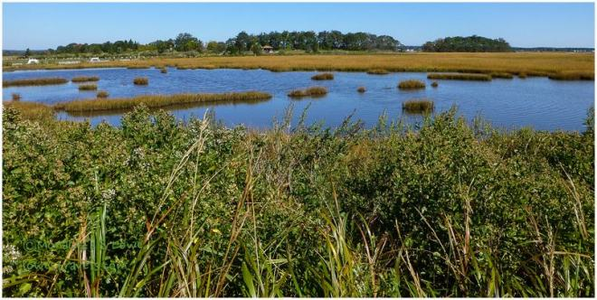 Hammonassett Salt Marsh