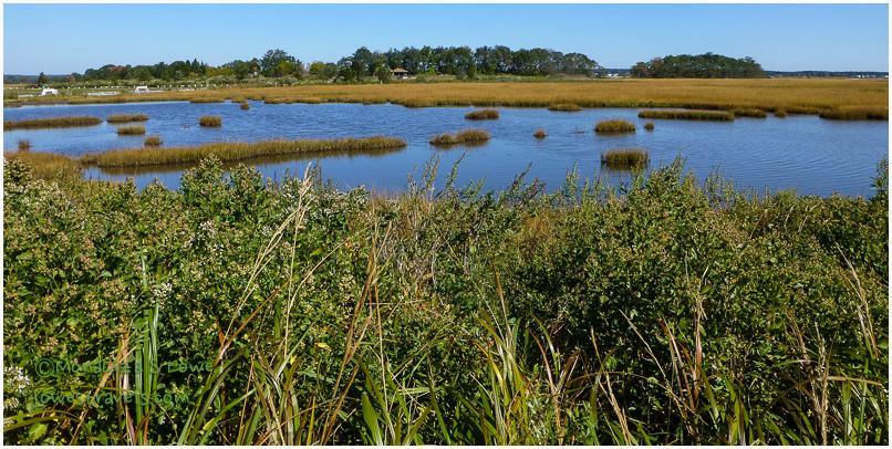 Hammonassett Salt Marsh