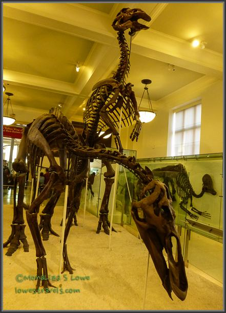 Dinosaurs at the American Museum of Natural History