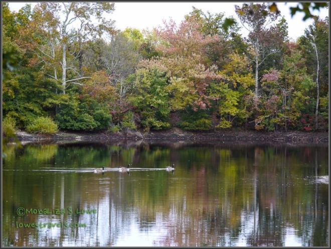 Chestnut Lake