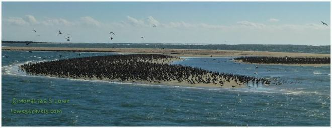 Migrating Birds, Ocracoke Island