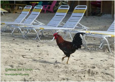 Cane sugar Beach, Tortola