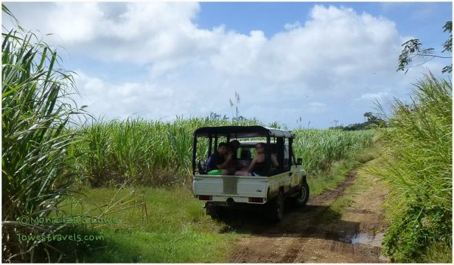 Sugar Cane Plantation, St Joseph Barbados
