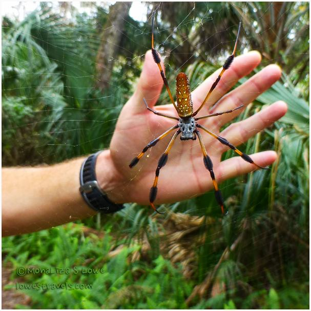 Big spider
