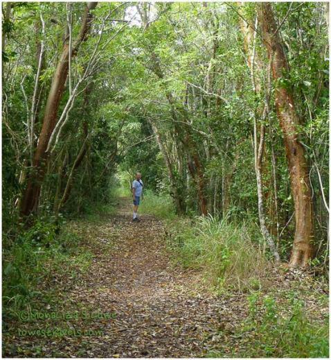 Bear Lake Trail, Everglades