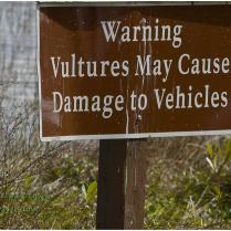 Vulture Warning