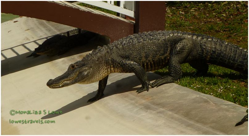 Mobile Alligator