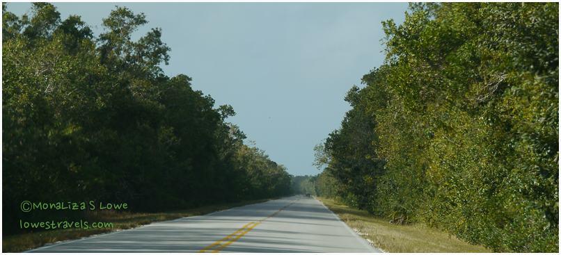 Main Park Road, Everglades