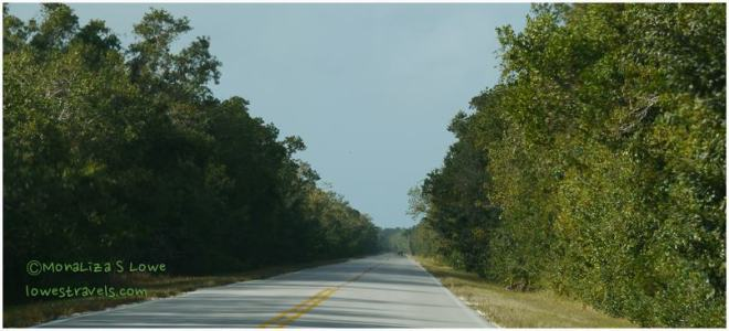 Main Park Road, Everglades