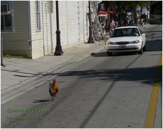 Rooster crossing street