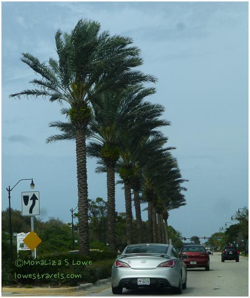 Palm Trees seen in Venice, FL