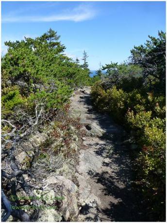 East Trail, Schoodic Peninsula