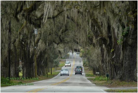 Avenue of Oaks, Floral City
